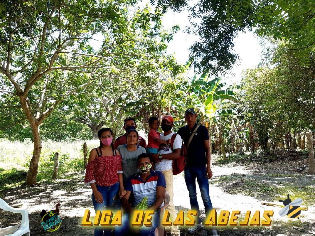 Liga de las Abejas - Una Apuesta Por la Paz en Colombia